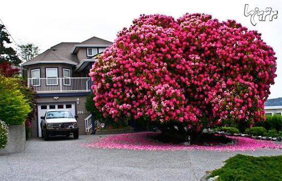 باورنکردنی ترین درختان جهان!